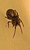 Avatar d'une araignée.