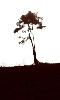 dessin sur la nature,l'arbre