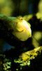 Petite image d'un bourgeon jaune.