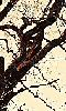 Avatar des branches d'arbre
