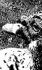 Petite photo en noir et blanc du canard