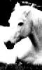 Avatar du cheval blanc
