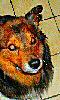 Avatar d'un chien roux