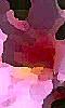 Petite image abstraite d'un nénuphar à la couleur rose.