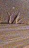 Petite photo d'un dessin abstrait sur le sable.
