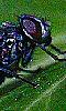 Avatar d'une mouche