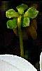 Petite photo du dos d'une fleur.
