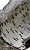 Petite photo de l'écorce d'un bouleau