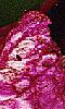 Petite photo d'une pétale de fleur fanée.