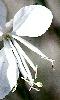 Avatar d'une fleur blanche