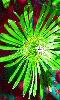 Avatar d'une fleur verte