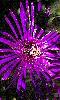 Avatar d'une fleur mauve