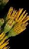 Petite photo de fleurs jaunes.