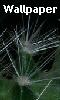 petite photo des épines de cactus - fond d'écran