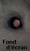 Petite photo de l'oeil rose du rat - fond d'écran
