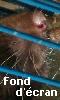 Petite image du museau d'un rat curieux - fond d'écran