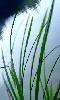 Avatar zen d'herbes sauvages