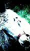 Petite image impressioniste d'un �ne