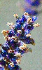 Petite photo de fleurs de lavande fanées.