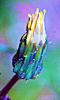 Petite photo d'une fleur aux couleurs pastels.
