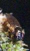 Petite photo d'un moucheron