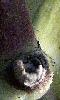 Petite photo du noeud de la tige