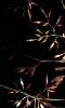 Petite photo d'herbes sauvages dans la nuit.