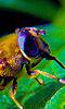 Petite photo de l'oeil d'une abeille