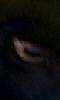 Petite photo de l'oeil jaune d'une chèvre