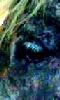 Petite image abstraite de l'oeil d'une jument