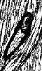Petit dessin abstrait de l'oeil de Moby Dick