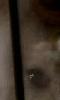 Petite image fantomatique d'un oeil de rat