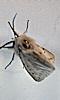 Petite photo d'un papillon de nuit