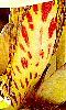 Petite photo de la pétale d'une fleur exotique