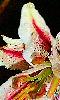 Avatar d'une pétale de fleur.