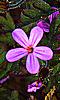 Avatar d'une petite fleur mauve.