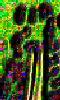 Des pistils - Une petite image abstraite