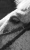 Petite photo sur le regard d'un cheval
