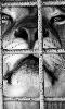 avatar du roi lion en cage