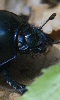 Avatar d'un scarabée