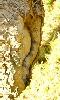 Petite photo du sexe de la femme arbre.