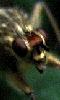 Petite image de la t�te d'un insecte