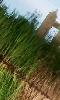 Petite photo de l'herbe verte et du reflet