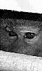 avatar des yeux du babouin