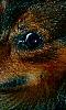 Avatar de l'oeil d'un chien