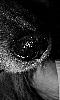 Petite photo de la truffe d'un chien.