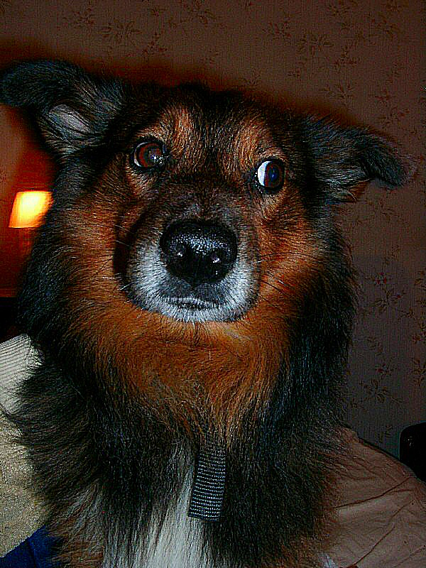 photo du chien assis. Black Bedroom Furniture Sets. Home Design Ideas