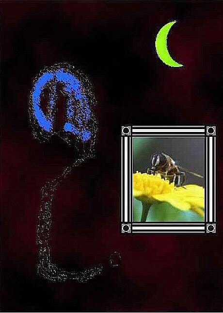 Une image d'insectes - un dessin et une photo