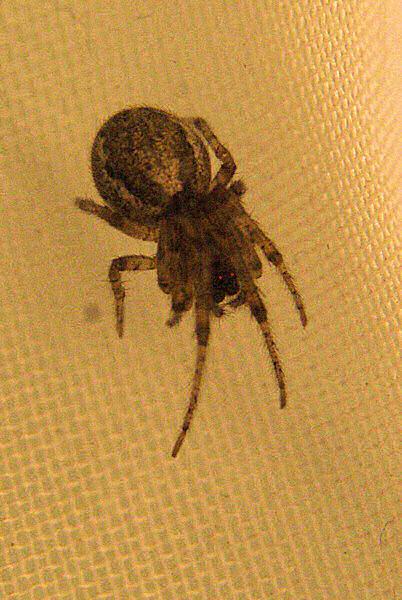 Photo sépia et or d'une araignée