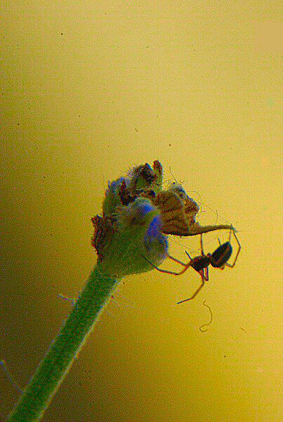 Photo - Avoir une araignée sur la tige - Au plafond